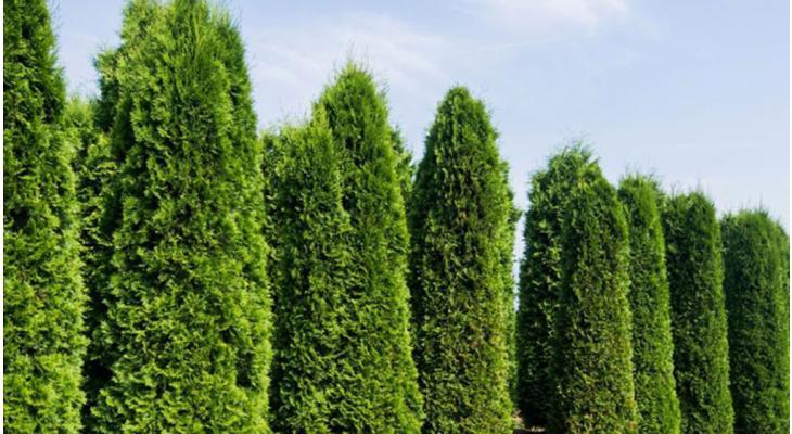 Haag planten