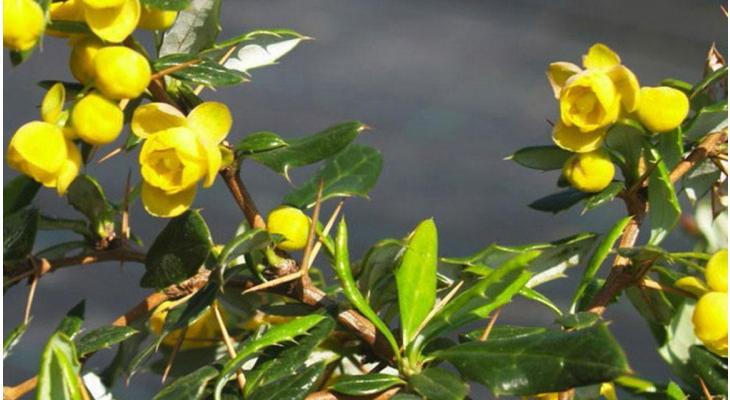 Wat doe je bij aanhoudende droogte met je haagplanten