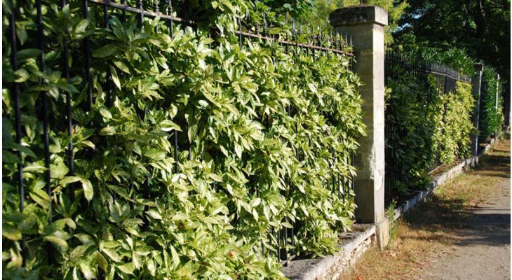 Haagplanten groen
