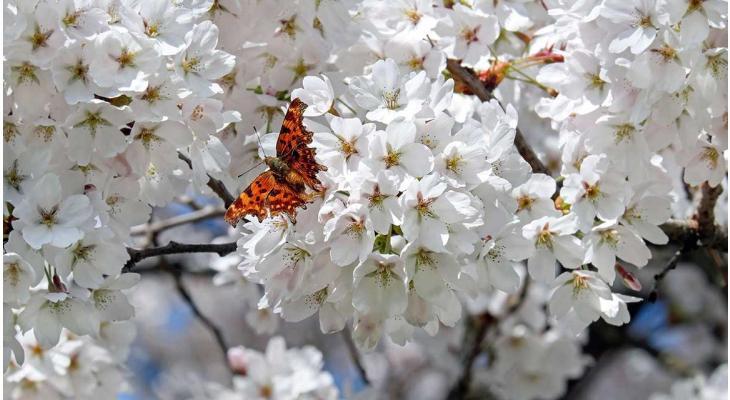Het is bijna lente: dit kunt u in de tuin doen