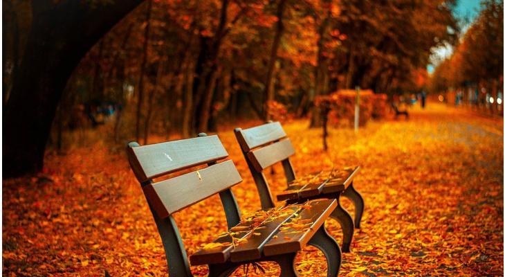 Haagplanten mooiste herfstkleuren