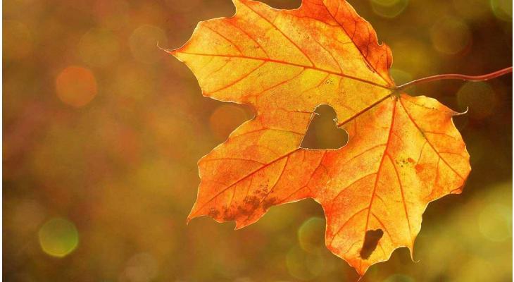 Waarom is de herfst het ideale plantseizoen