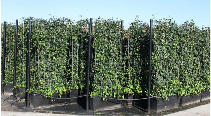 Kant-en-klaarhaag planten