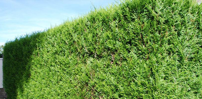 Haagplanten.net achter de schermen