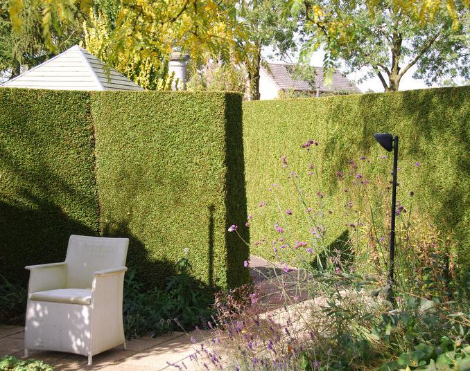 coniferen kopen voordelige coniferen van hoge kwaliteit. Black Bedroom Furniture Sets. Home Design Ideas