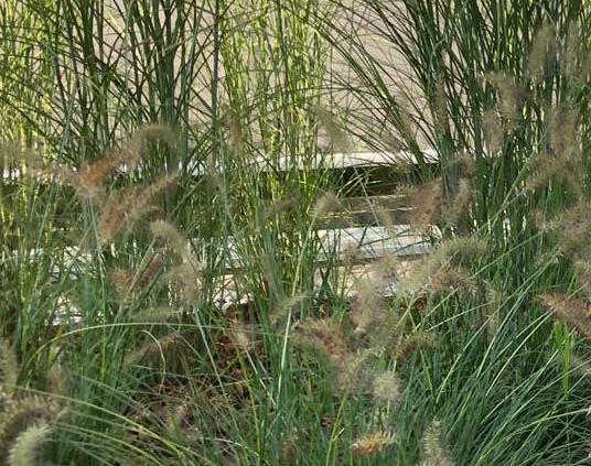 Siergrassen