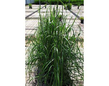 Bont struisriet kant-en-klaar-hagen 125-150 cm