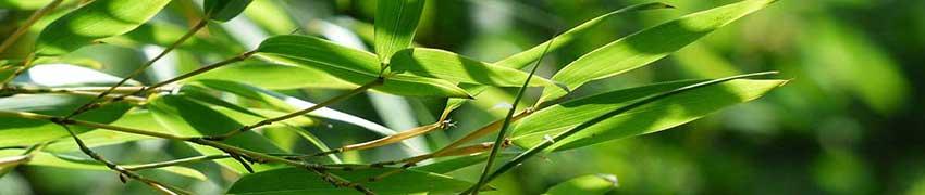 Bamboe tuin afscheiding
