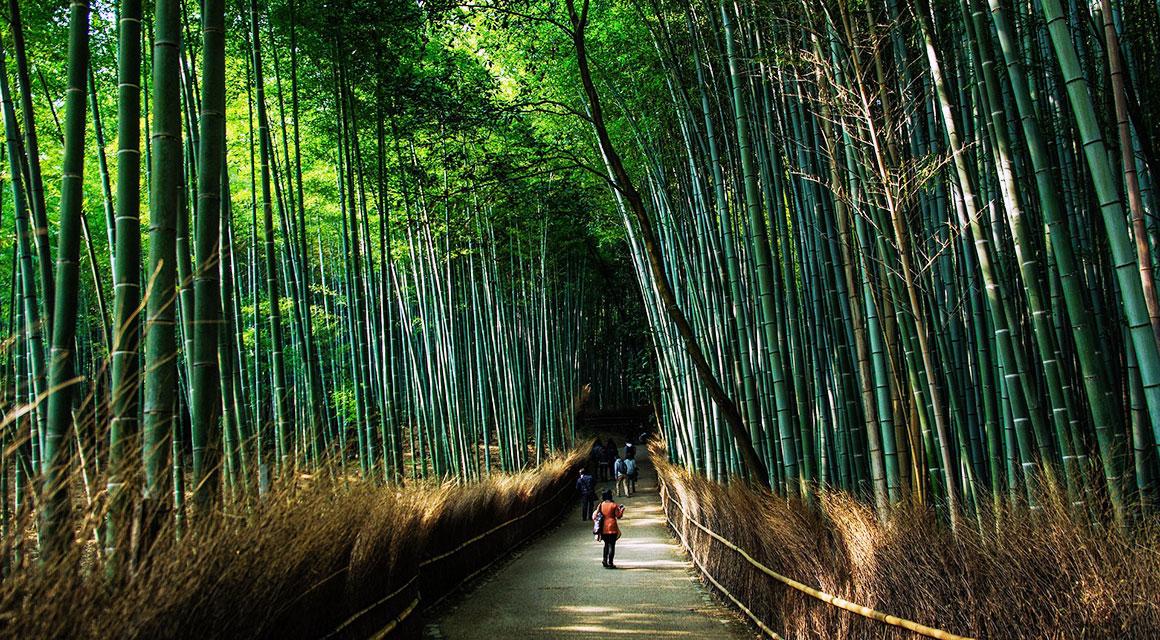Bamboe is decoratief, maar ook nuttig