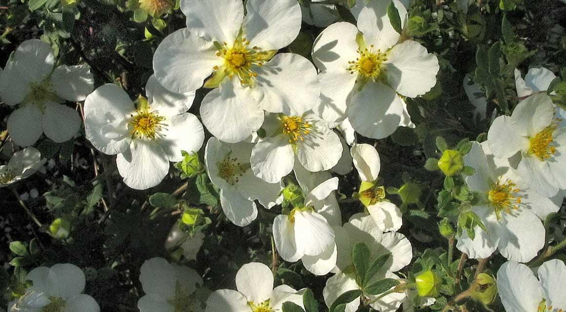 Bladverliezende haagplanten tuin