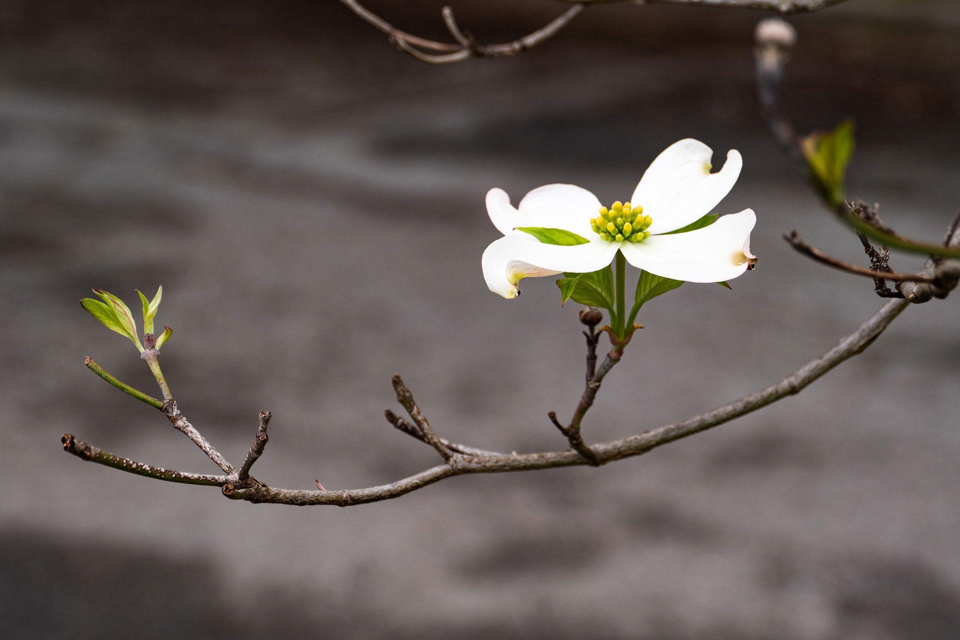 Bloeiende haagplanten
