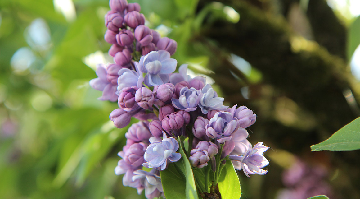 Die Blütezeit