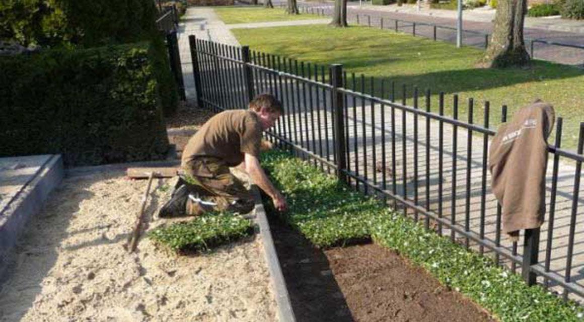 Ook bodembedekkende planten in uw tuin?