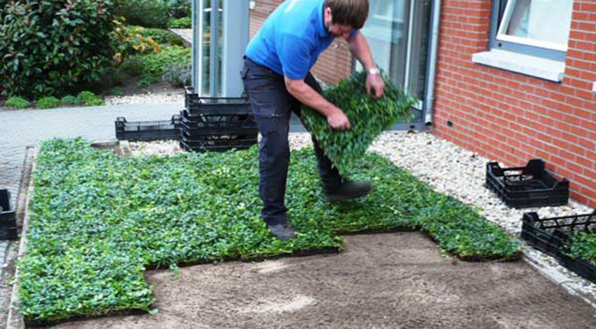 Bodembedekkers planten en verzorgen
