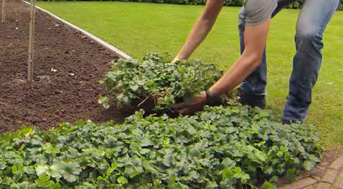 Wat kunnen bodembedekkers voor mijn tuin betekenen?