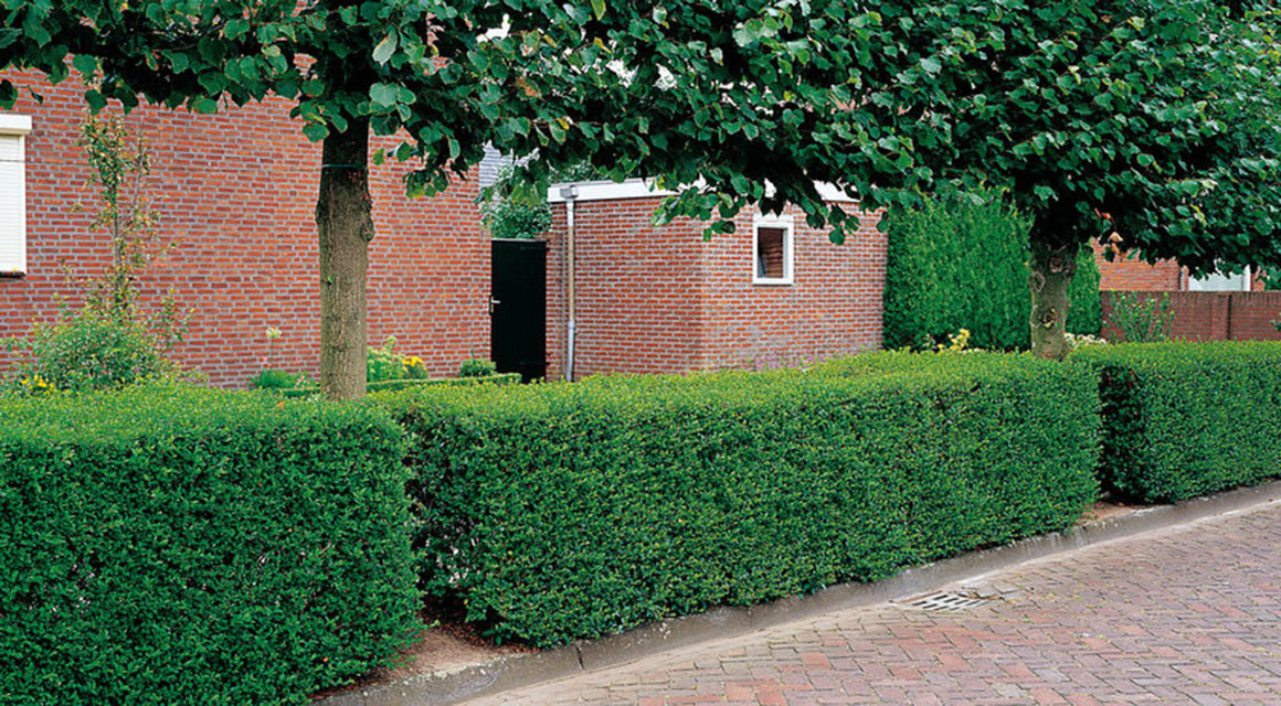 Schauen Sie sich die Boden-Sorte Ihres Gartens genau an