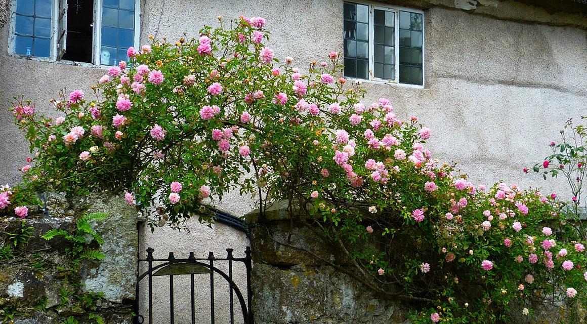 De Engelse tuin of cottage tuin