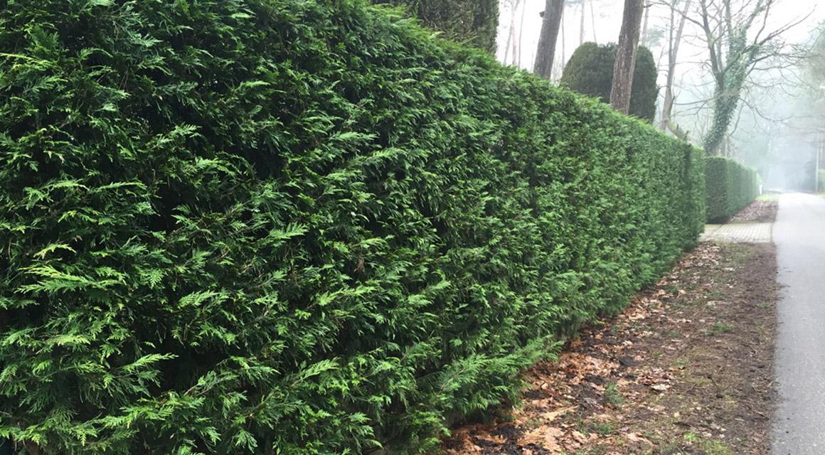 Waarom een groenblijvende tuinafscheiding?