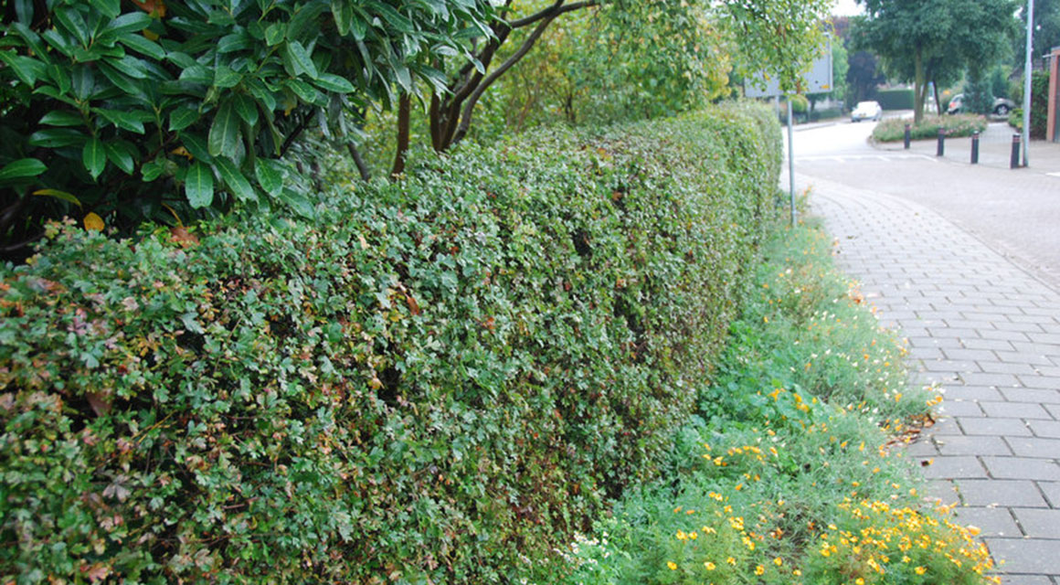 Waar bestaat een groene tuin uit?