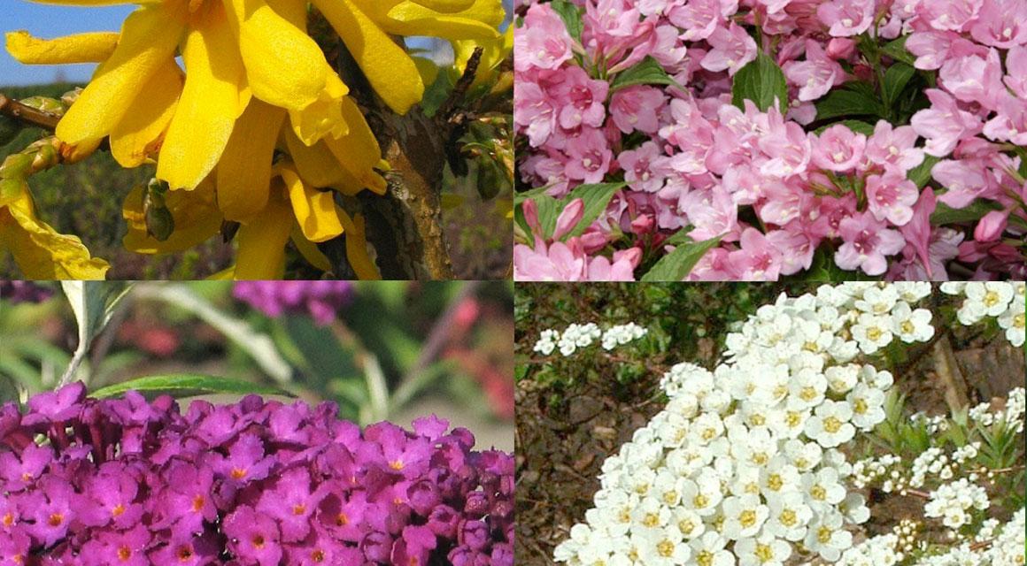 Welke haag in de natuurlijke tuin?