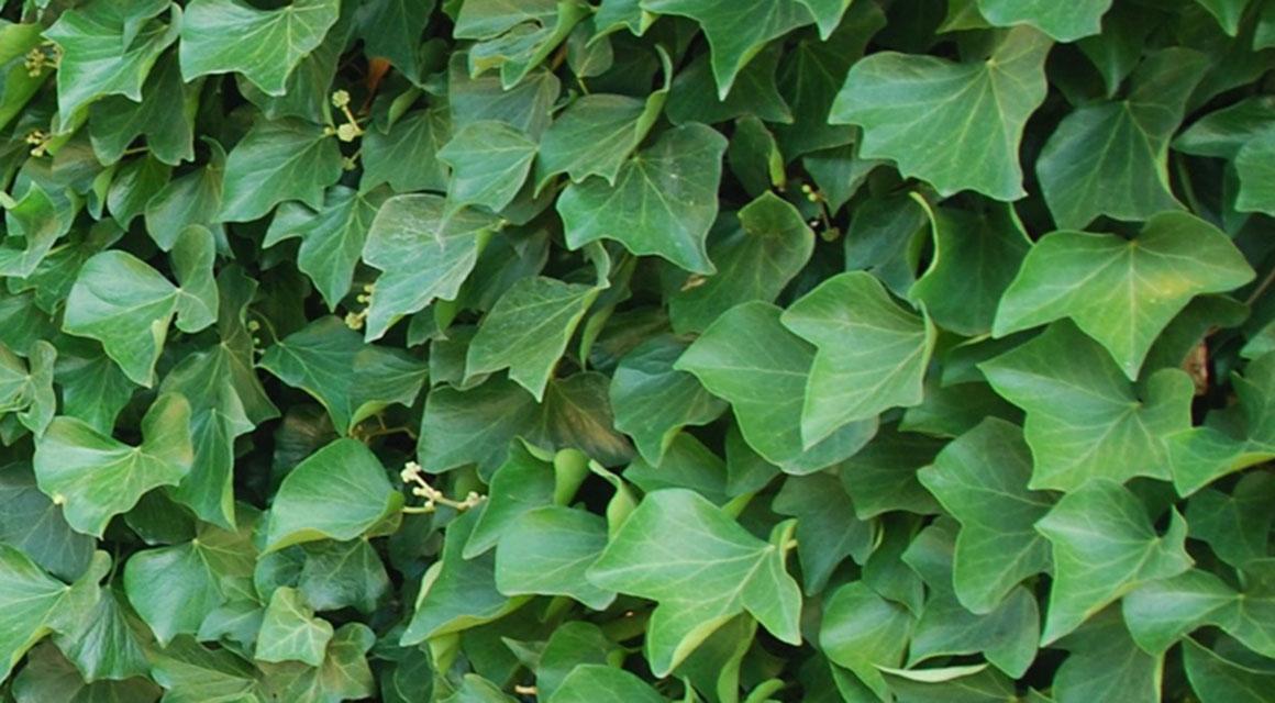 Haagplanten bij formaat tuin passen