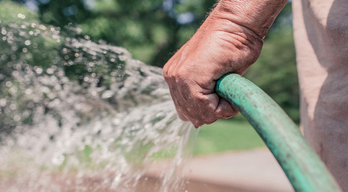 Haagplanten water geven