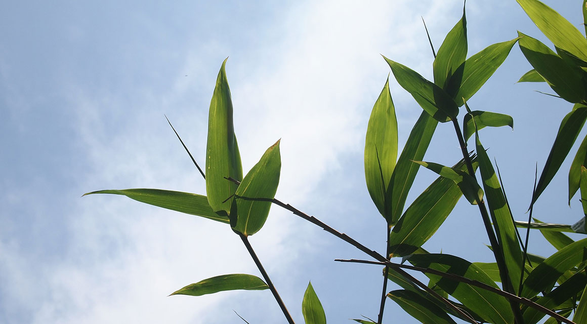 De juiste bamboe kiezen