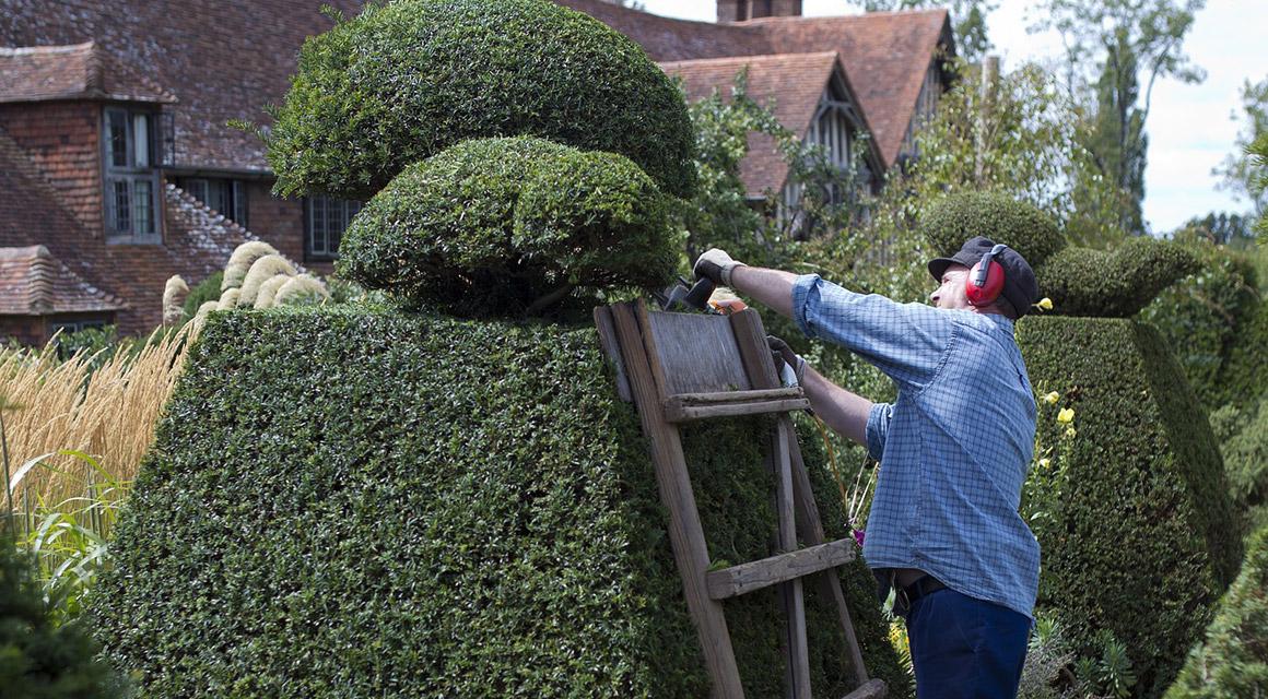 Kant en klare taxushaag in de tuin planten