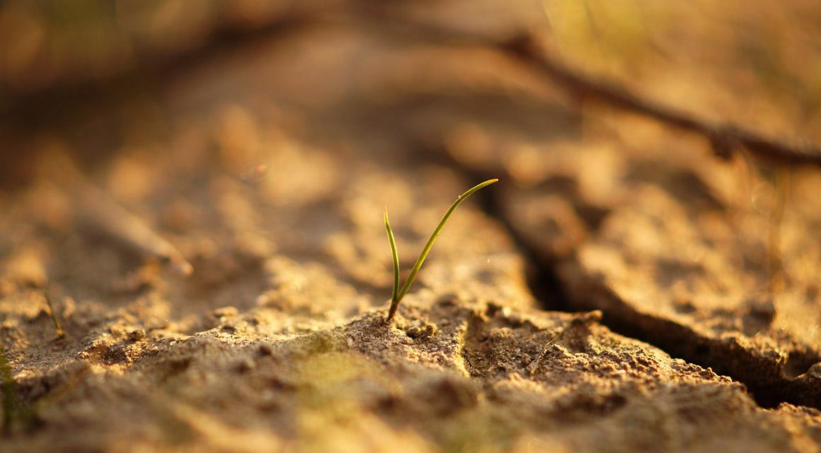 Magnesium-Mangel im Boden