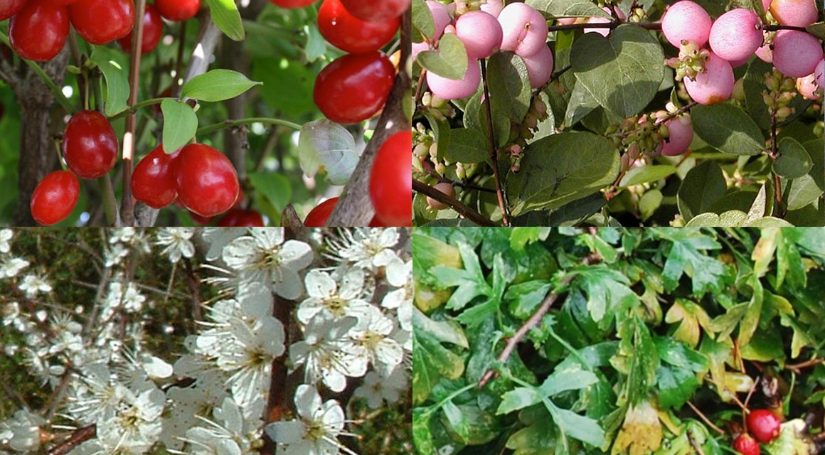 De natuurlijke tuin: goed voor mens, dier en milieu