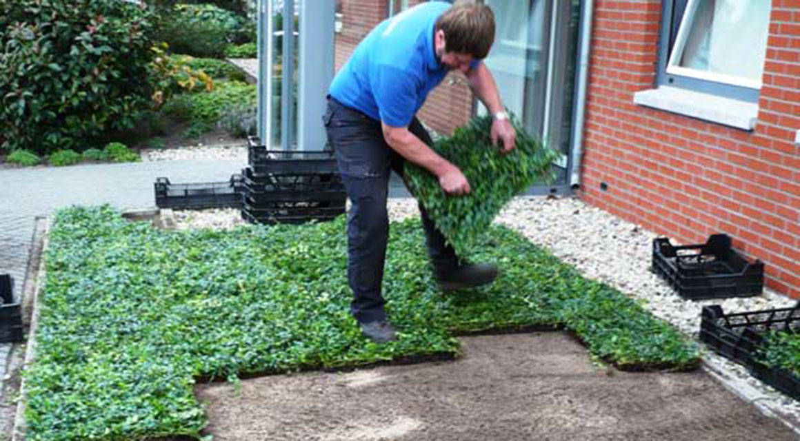 Hoe plant ik bodembedekkers?