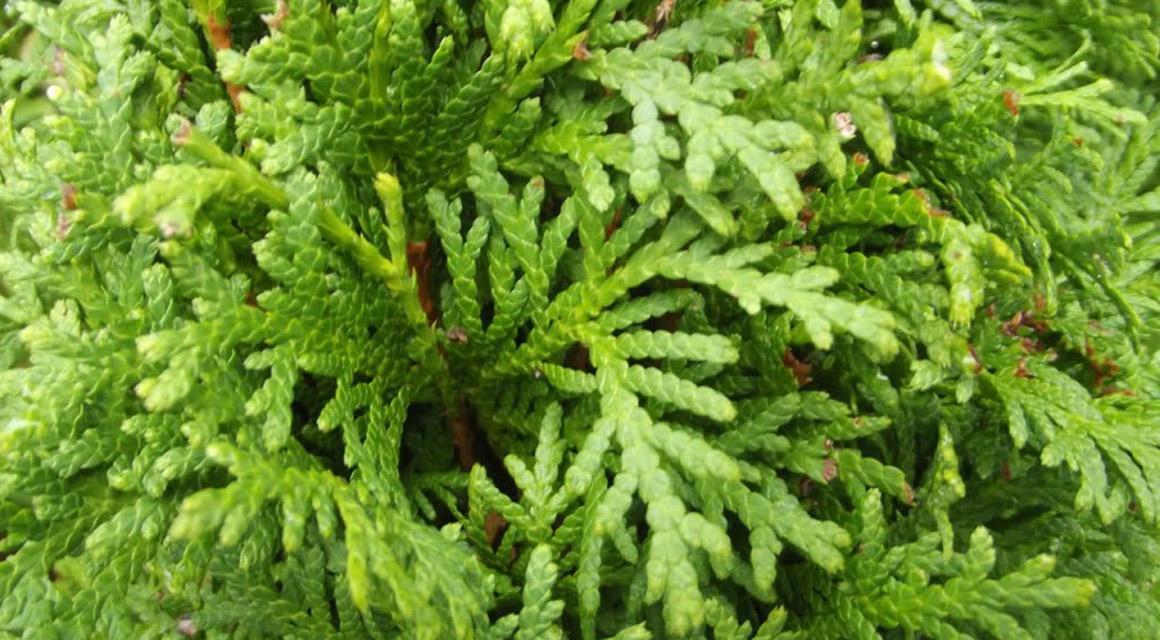 Het planten en verzorgen van een levensboom