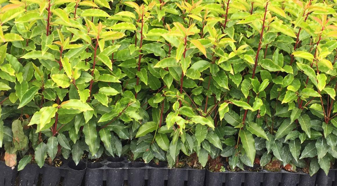 Plugplanten in uw tuin?