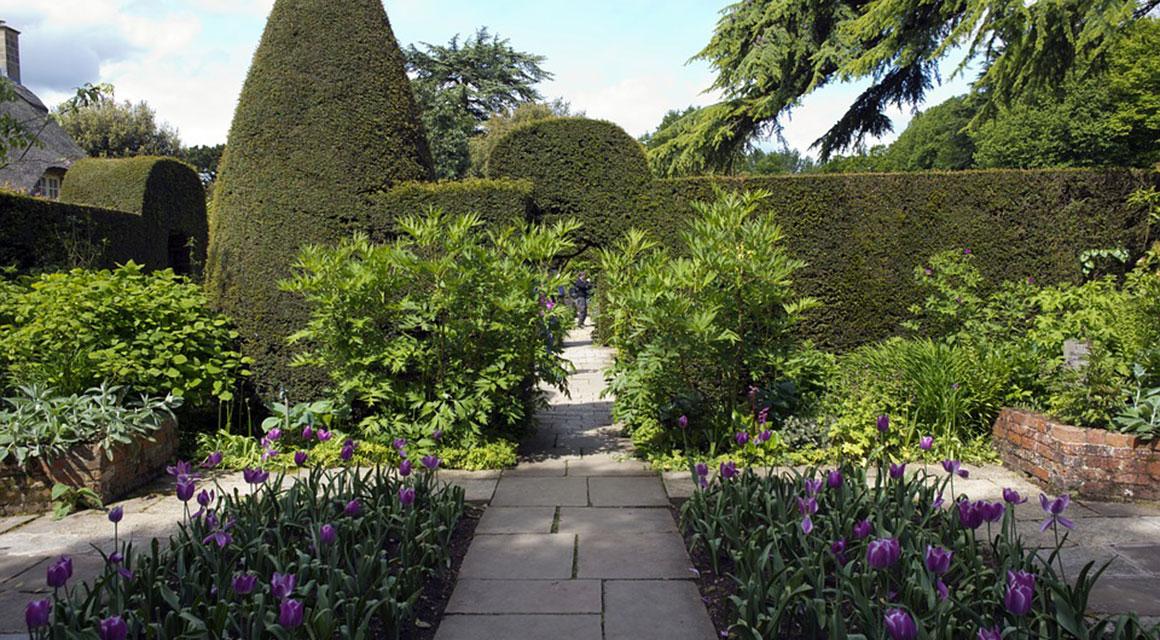 De taxus kan in grote en kleine tuinen aangeplant worden