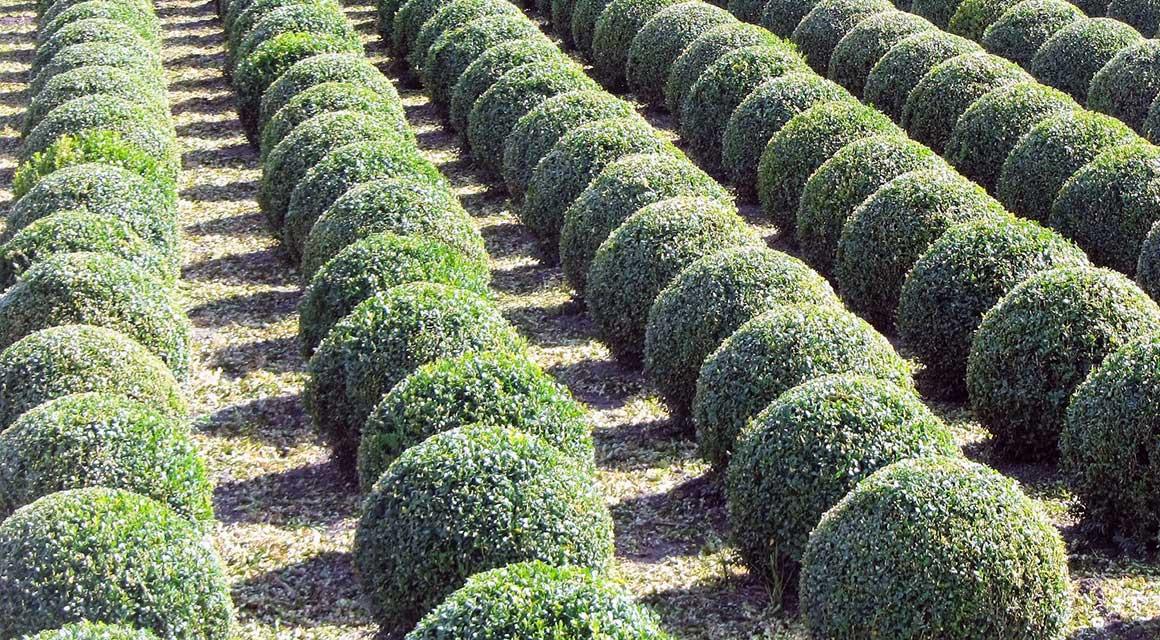 Haagplanten tuinontwerp