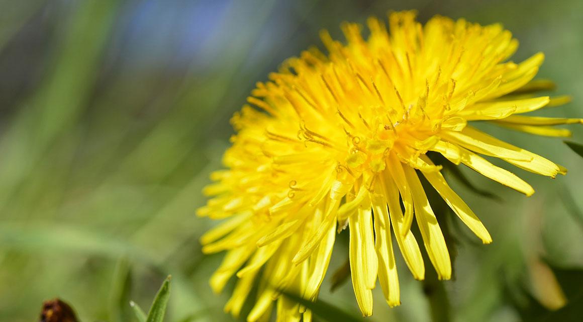 De planten kunnen tegen het Nederlandse klimaat