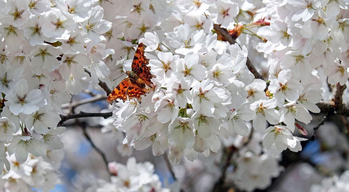 Uw tuinontwerp natuurlijker maken: enkele tips