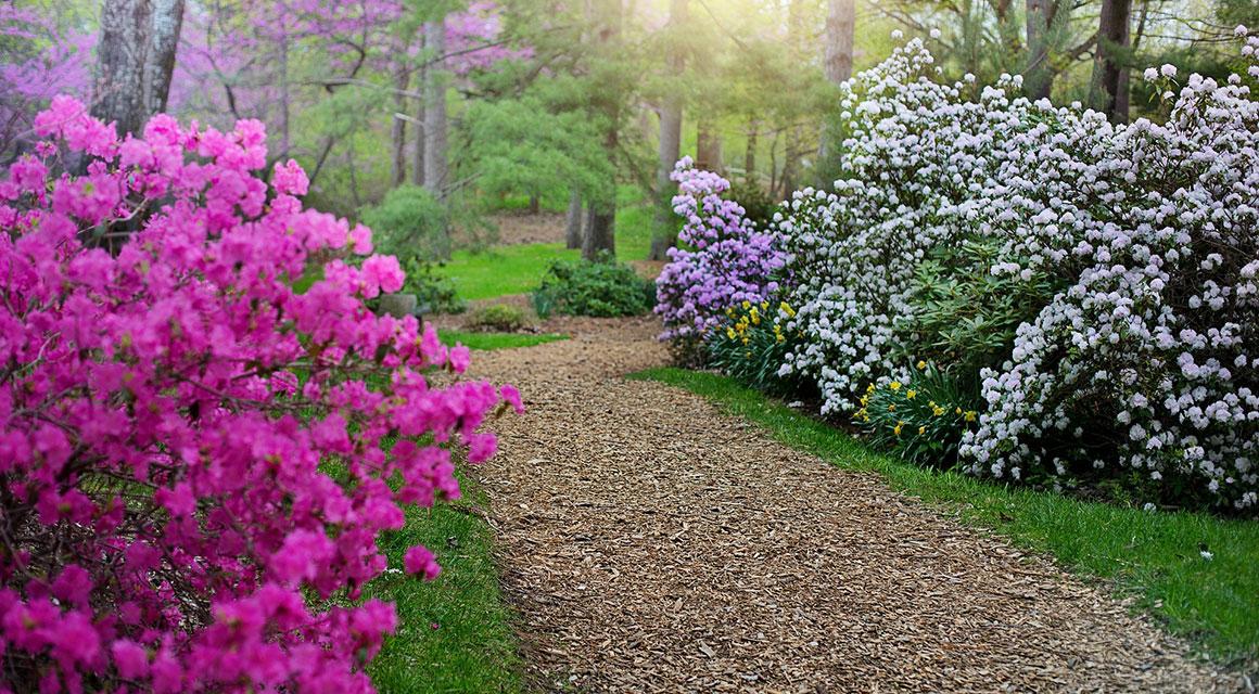 Wintergroene lentepracht