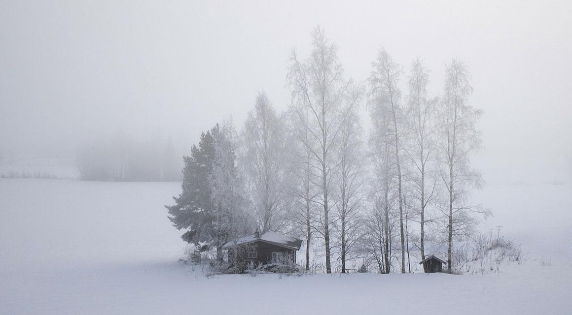 Winterharde haagplanten in andere delen van Europa