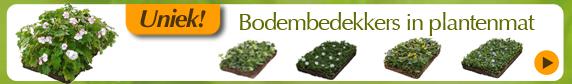 Bodembedekkers-banner-homepage