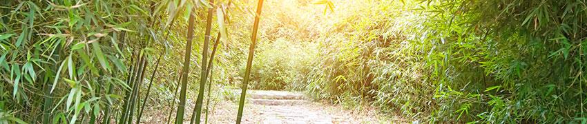 Bamboe als haagplant