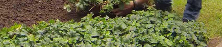 Planten die in de schaduw groeien