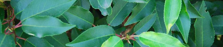 Planten die voor schaduw zorgen