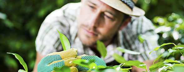 Haagplanten kwaliteit