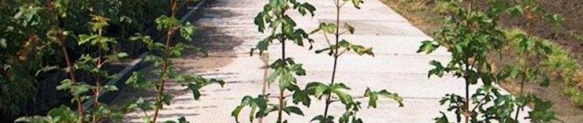 Veldesdoorn in de tuin