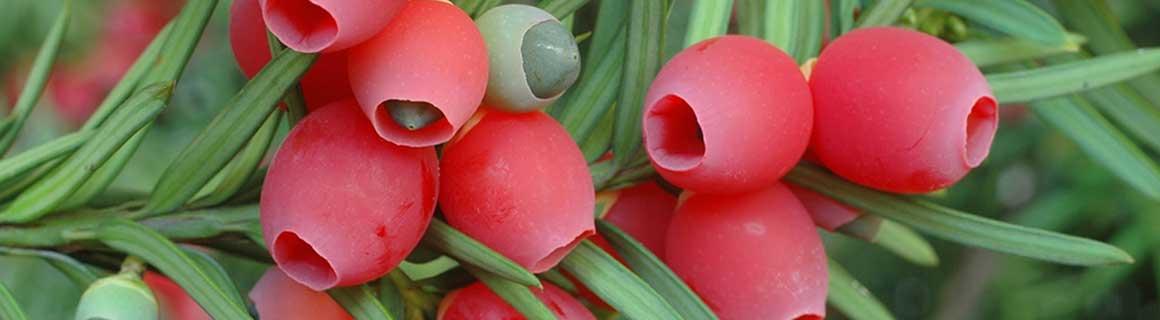 Haagplanten.net heeft de mooiste planten voor u