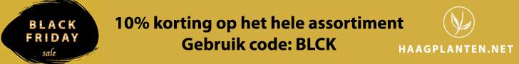 Haagplanten Black Friday