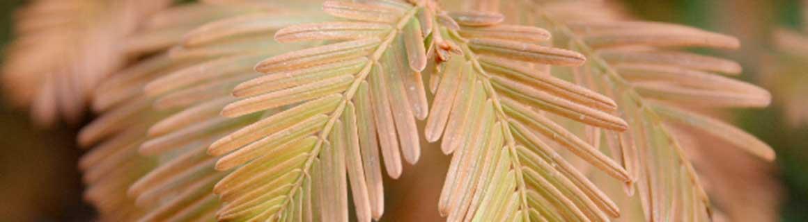 Informatie planten verzorgen haag
