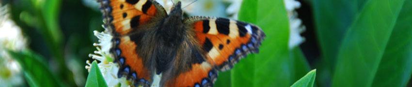Haagplanten.net – uw tuinplantenspecialist