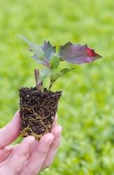 Een heel jonge potplant